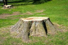 The History Tree Service